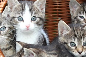 Bringing home your first pet cat