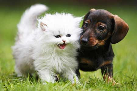 Kitten and small dog